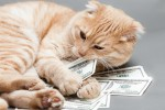 5 Ways to Save Big Money on Pet Care and Supplies