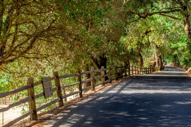 Napa Valley road