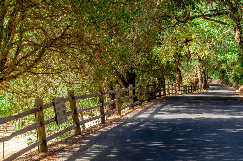 Napa Valley road