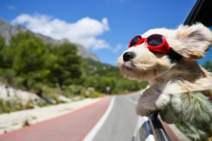 Dog Owners: 6 Tech Gadgets That Your Dog Will Love