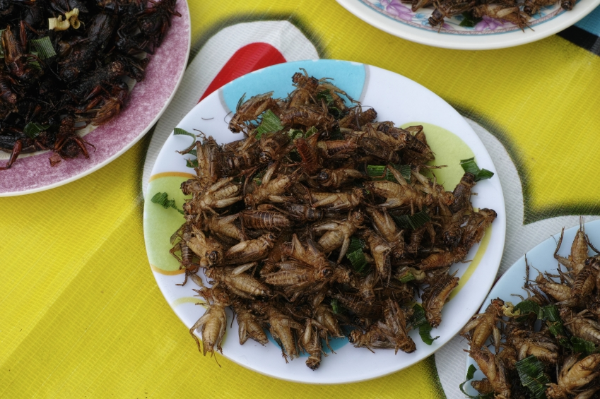 Fried Crickets, bugs