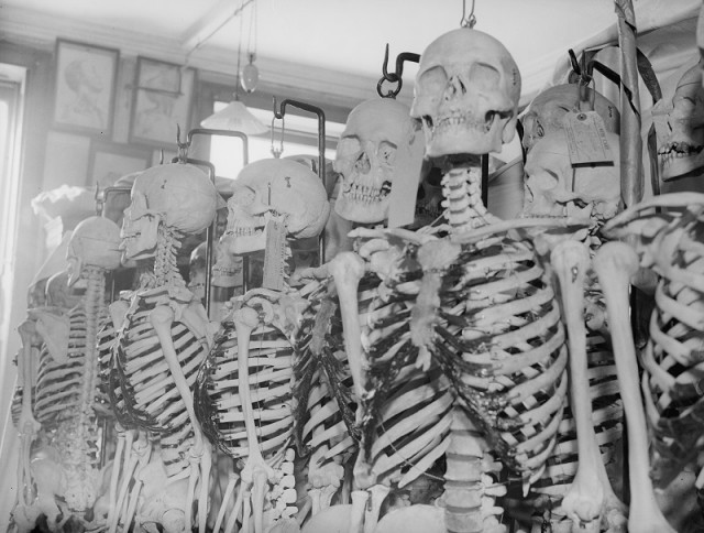 Skeletons lined up in a row inside a classroom.