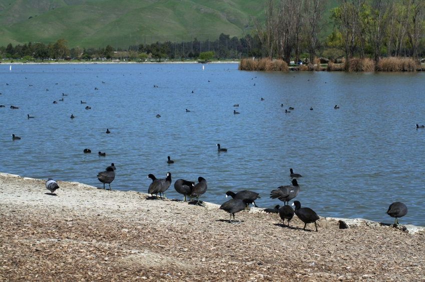 A lake in Fremont, California