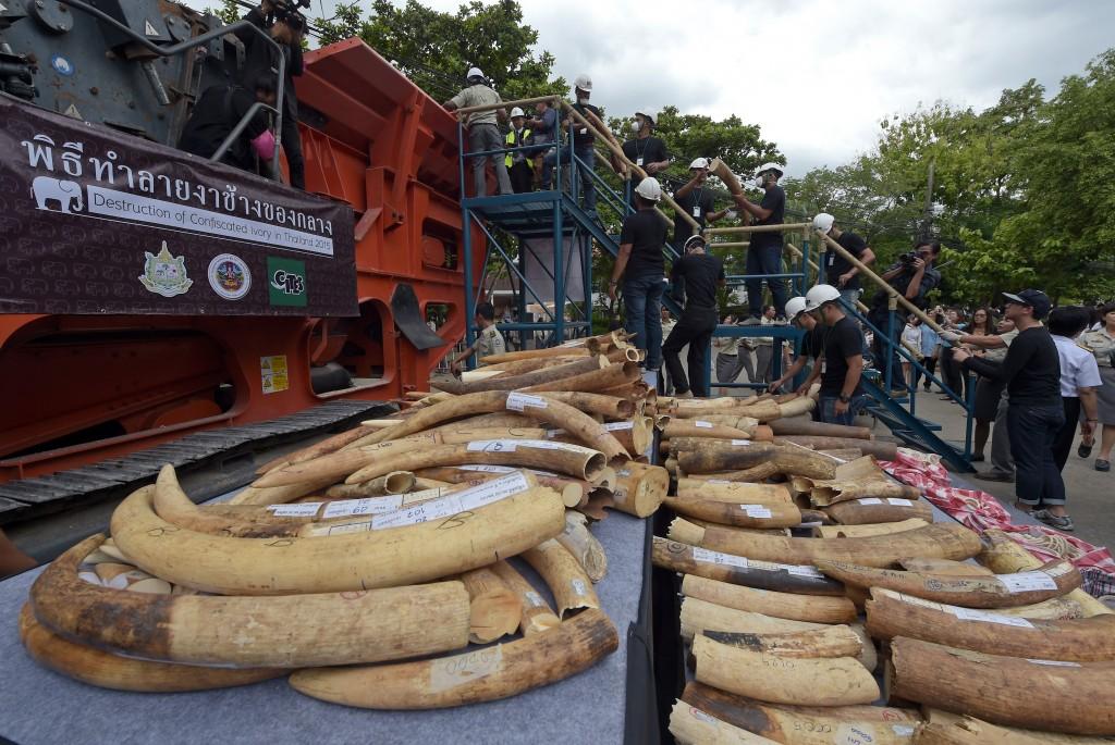 ivory poaching