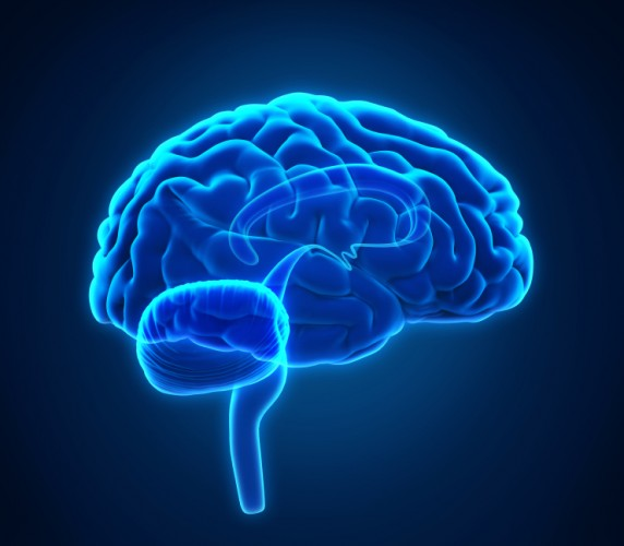 Brain highlighted in blue