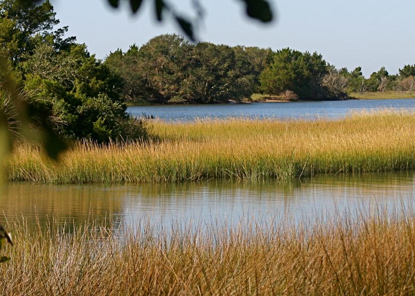 Beaufort, North Carolina, grass