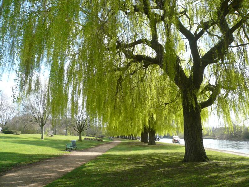 A park on a sunny day