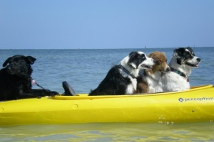 6 Great Vacation Spots for You and Your Dog