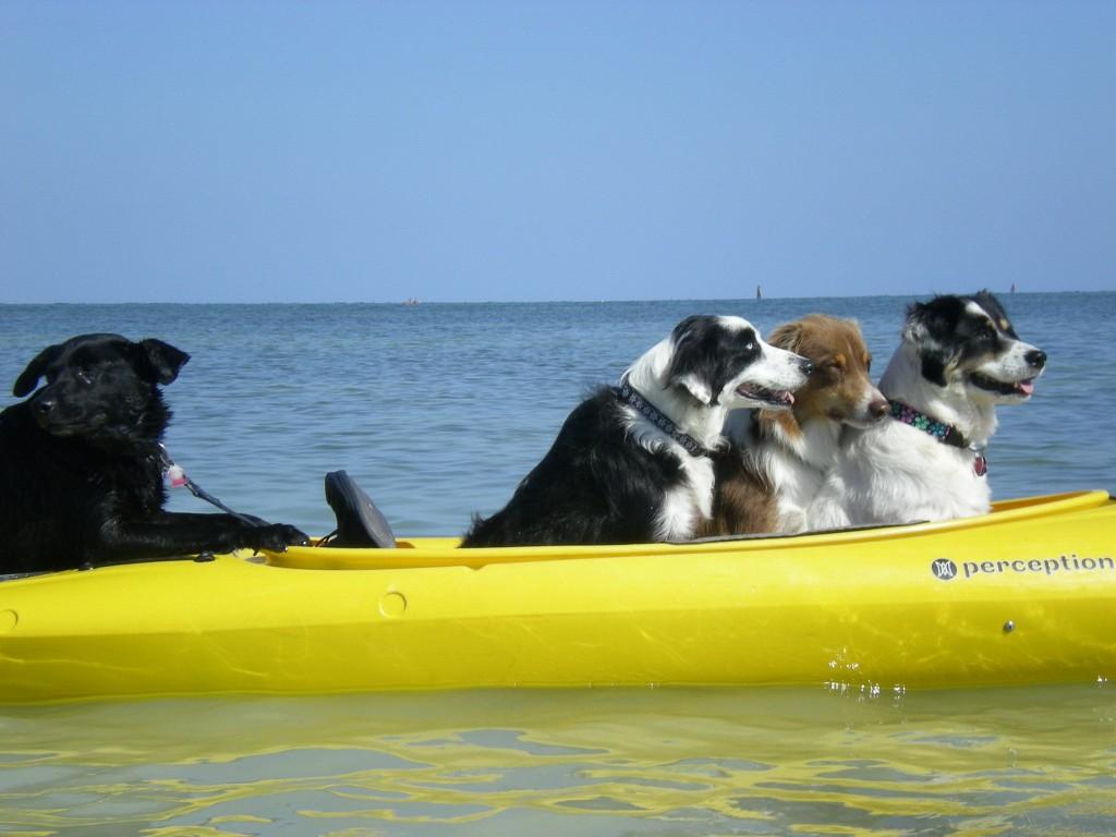 Lazy Dog Kayak, Florida