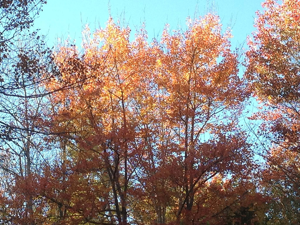 fall leaves, Maine