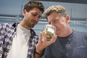 Legal Marijuana in Oregon: So Far, So Good