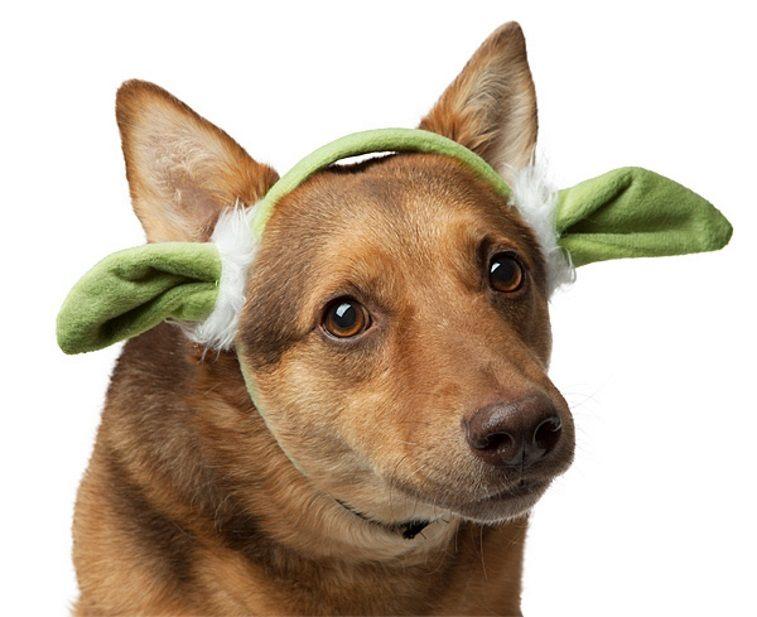 Star Wars Yoda Ears for Dogs