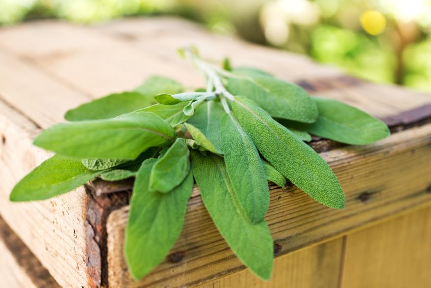 sage, herb