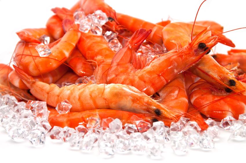 large fresh shrimp