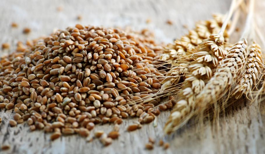 Whole grain wheat kernels