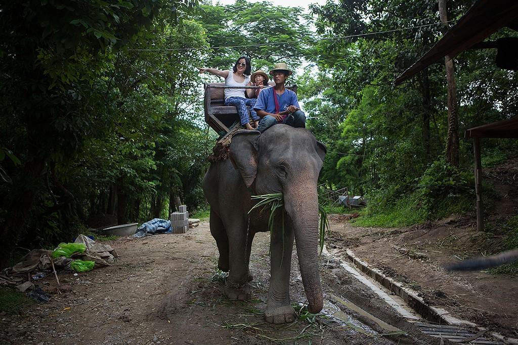 Thailand, elephant