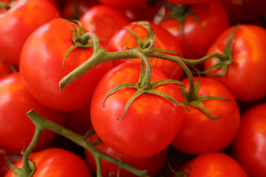 use fresh inseason tomatoes with these delicious recipes