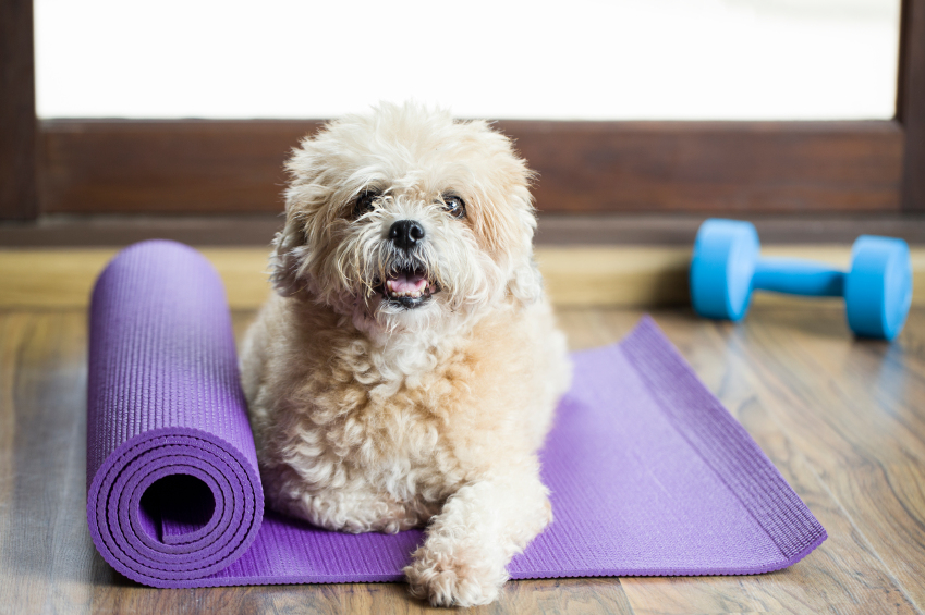 dog on yoga mat