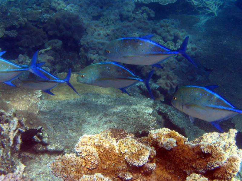 close-up of fish and coral in the Great Barrier Reef