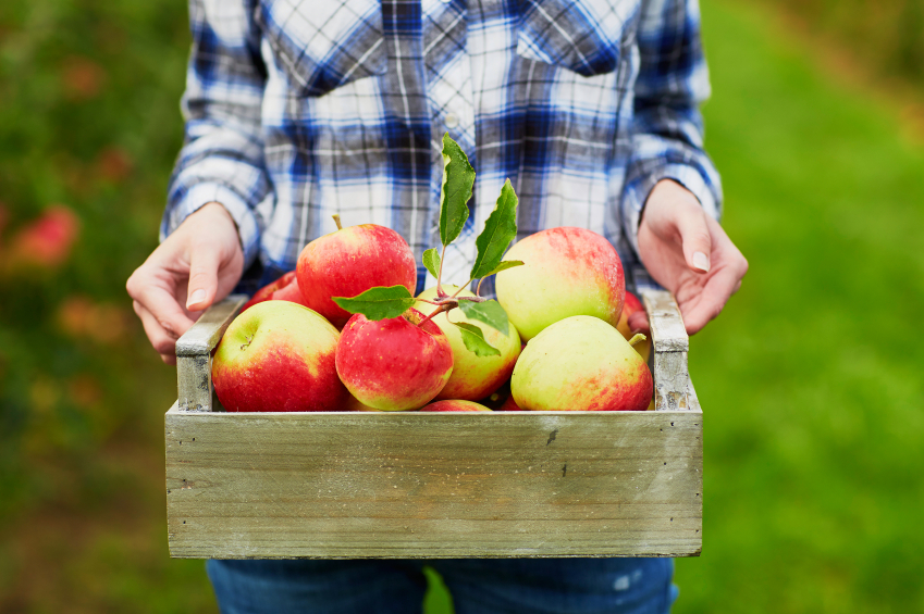 woman holding crate of red apples