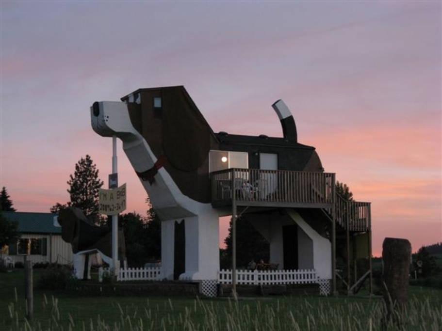 house shaped like a dog