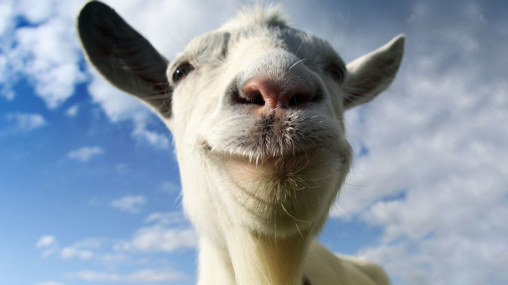 A goat stares directly into the camera on a sunny day.