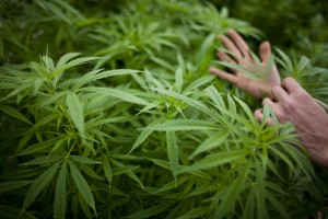 10 States That Are Getting Medical Marijuana Right