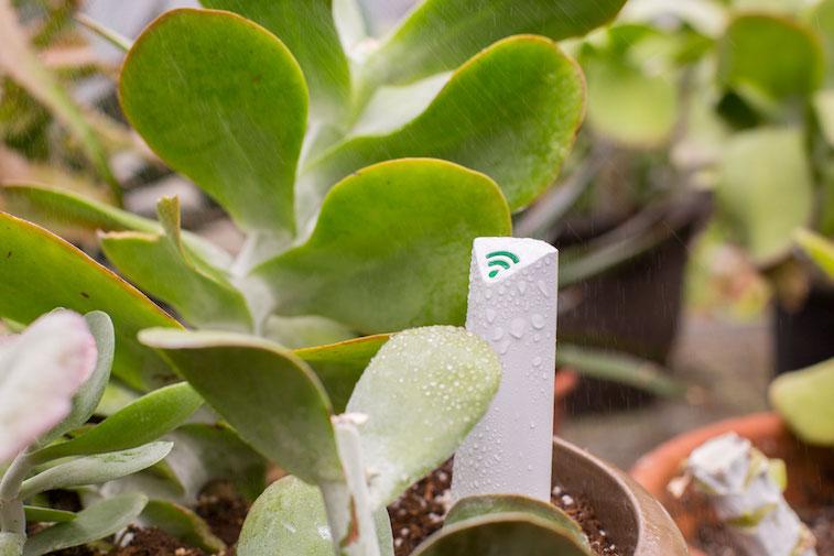 PlantLink