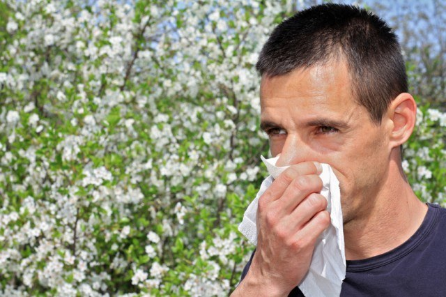 Man sneezing in a tissue while in front of a pollen-filled tree.