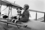 Flying With Pets? Here's What You Need to Know