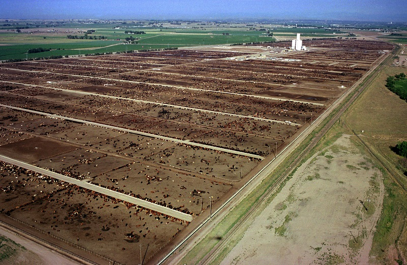300,000 cattle graze in three feed lots owned by ConAgra Foods near Greeley, Colorado | Kevin Moloney/Getty Images