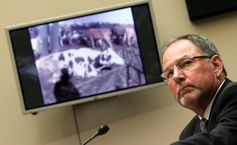 """Westland/Hallmark Meat Co. CEO Steven Mendell watches a video of """"downer"""" cattle at his slaughterhouse"""