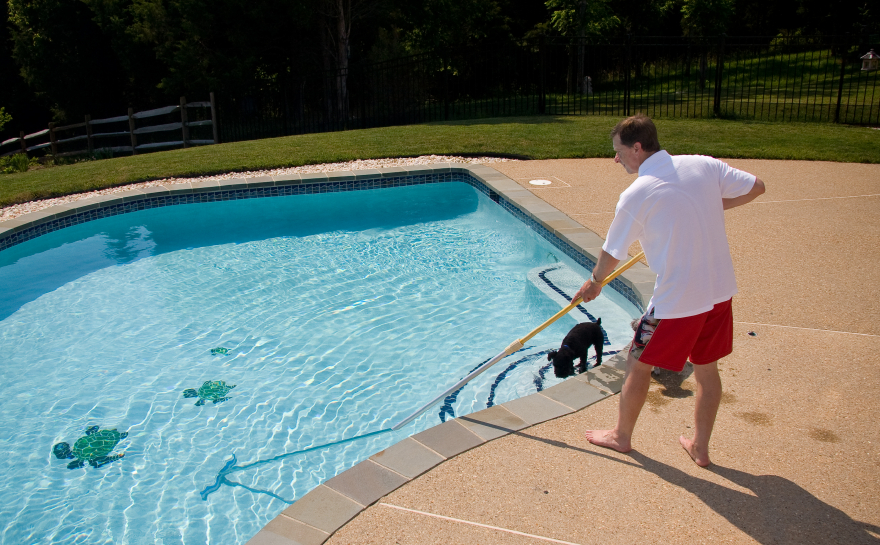 Man cleaning pool with a dog