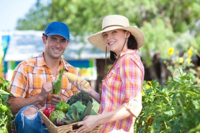 two happy farmers harvesting summer produce