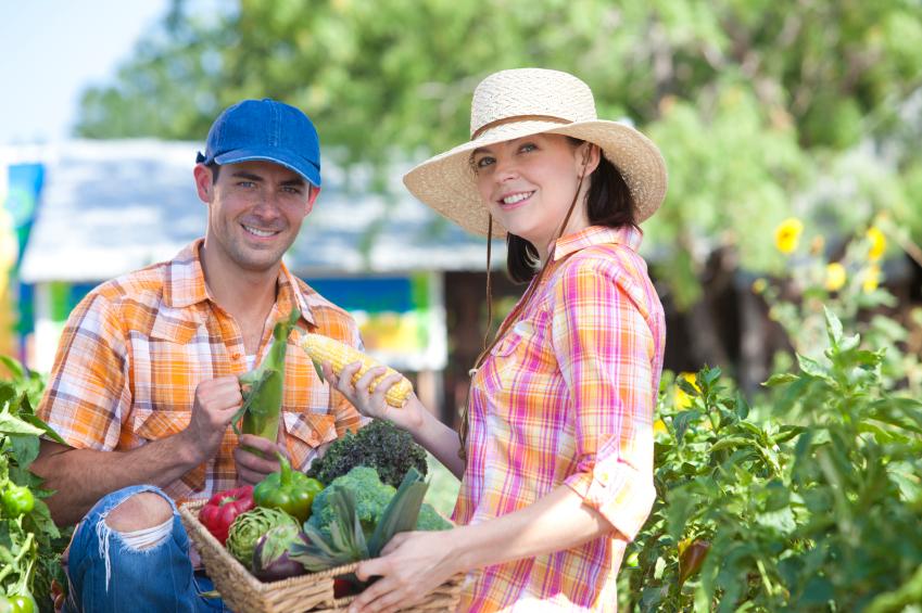 harvesting produce