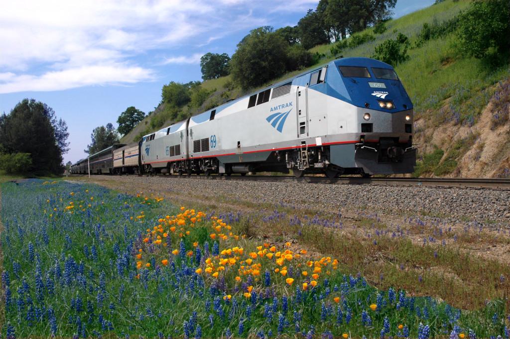 An Amtrak train travels through a field of wildflowers.   Source: Amtrak