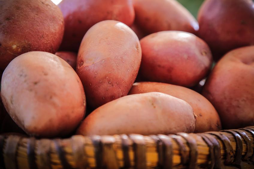 Close up of fresh potatoes