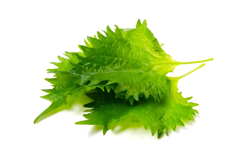 SHISO in white background