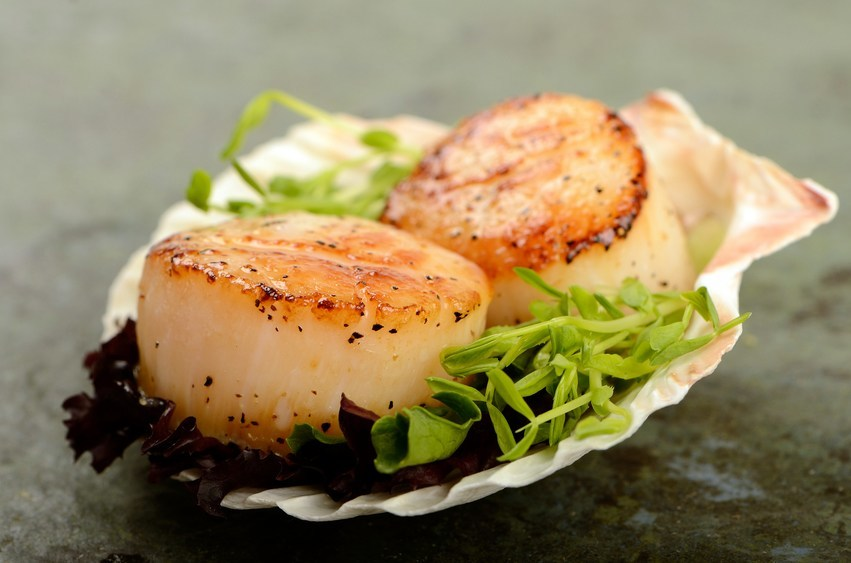 two scallops