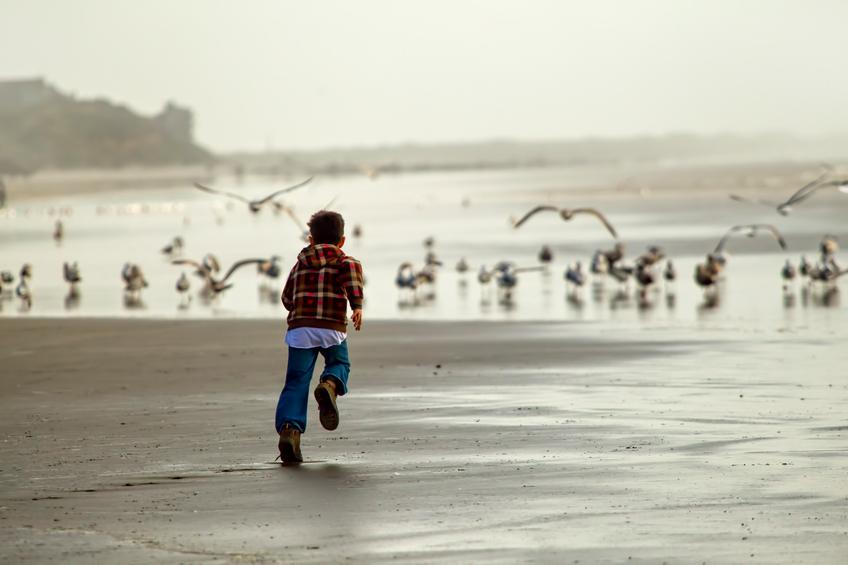 boy chases seagulls on the beach