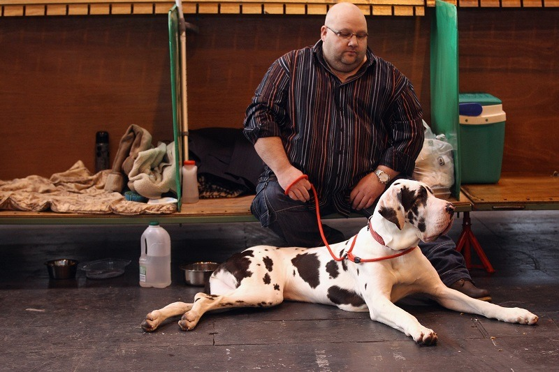 A man rests in the stalls with his Great Dane