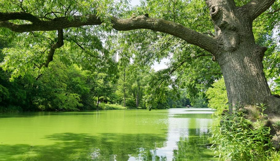 Algal Bloom Lake