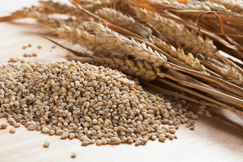 Pearled Barley and wheat sticks on a white background
