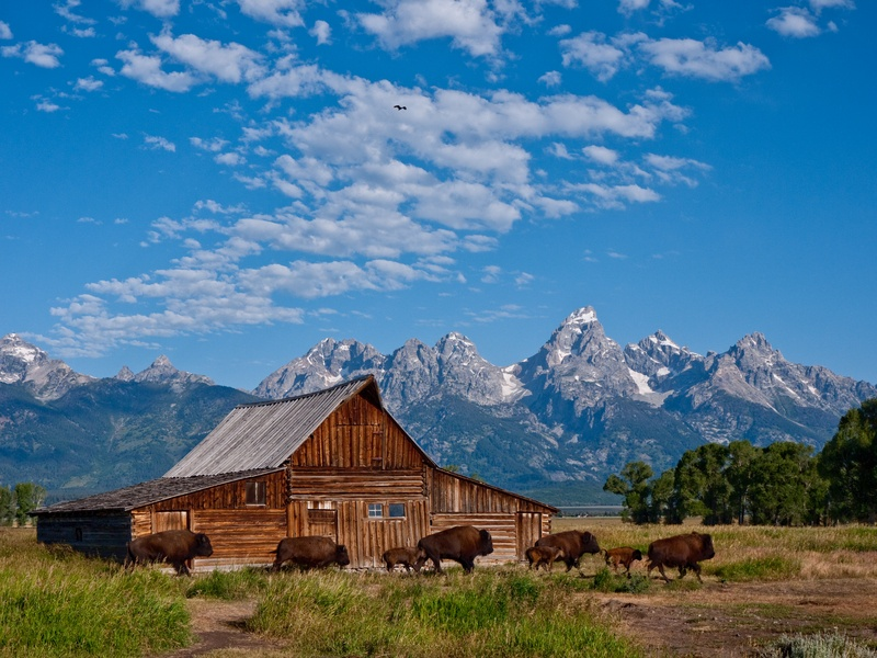 Barn in Wyoming with Bison and Tetons