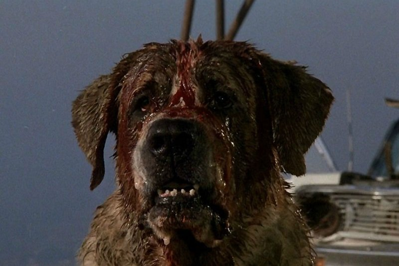 'Cujo' is dangerous, but some dog breeds tend to produce more dangerous dogs