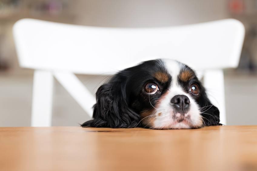 cute dog on a table