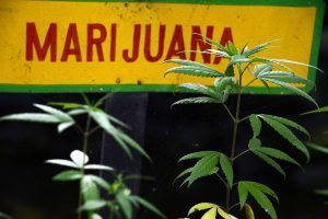 Marijuana Side Effects: 5 Worst Complaints From Users