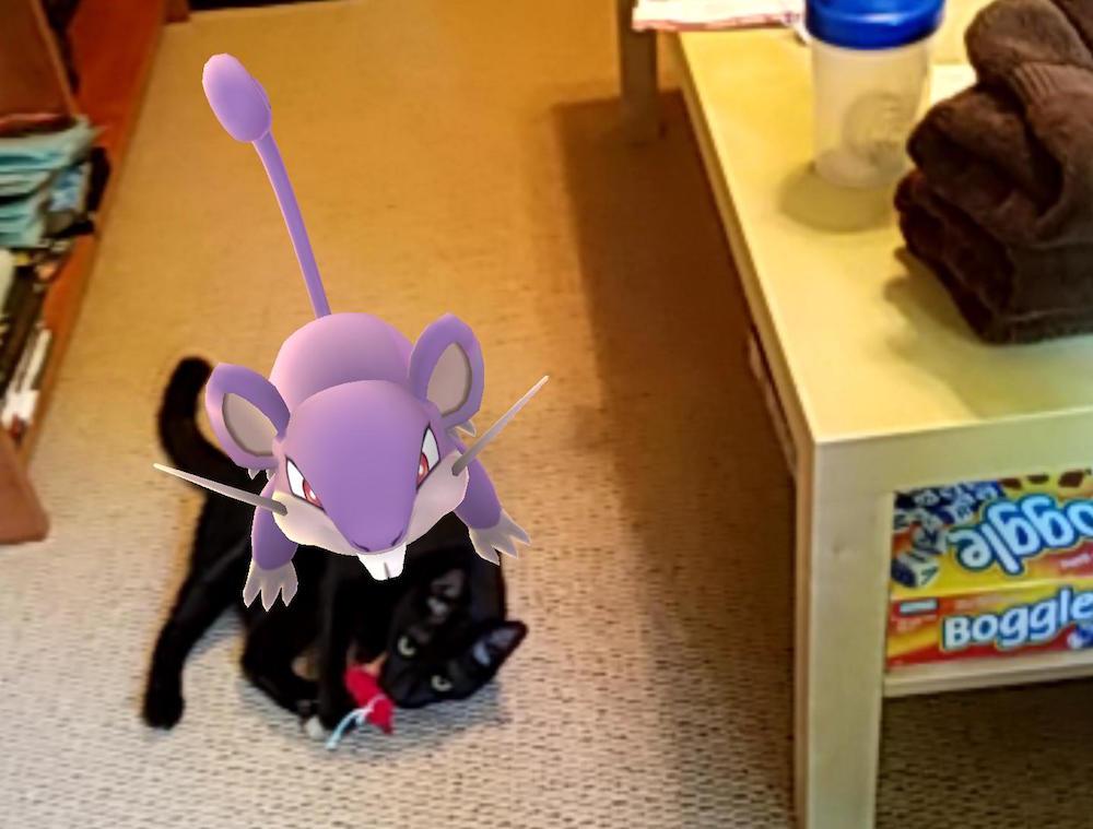 A Pokemon on a pet in Pokemon GO.