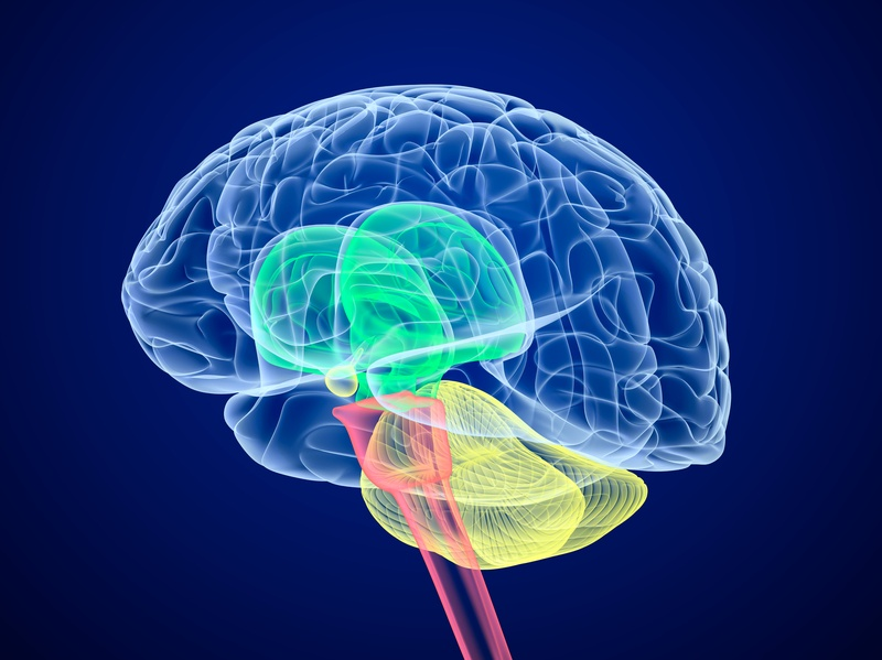 Brain-lobes-in-different-colors - 9 Unexpected Stroke Symptoms You Need to Know - Health and Food