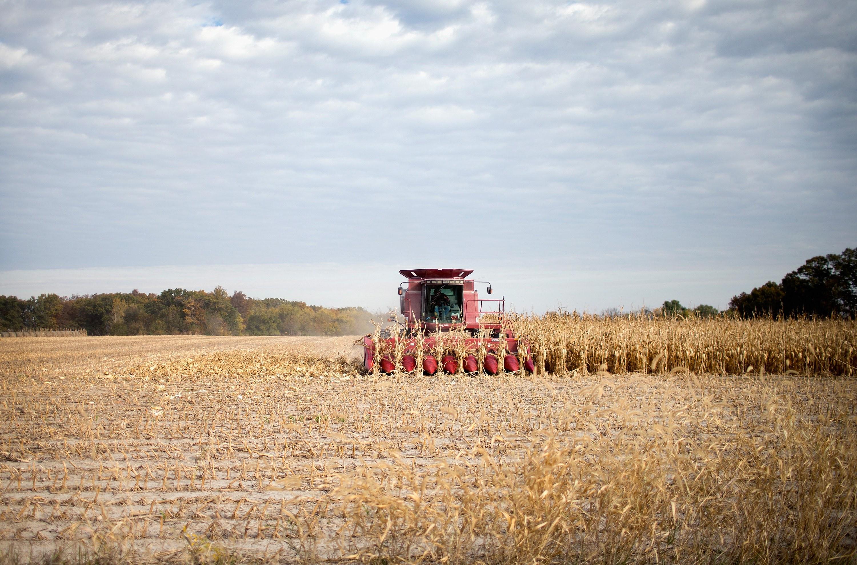 An Iowa farmer harvests corn